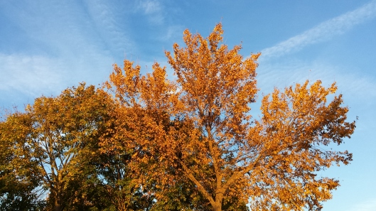 Fall foliage tree picture