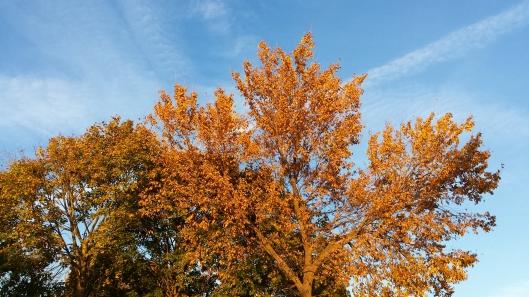 Fall foliage tree picture